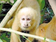 """A imagem """"http://www1.folha.uol.com.br/folha/ciencia/images/20060520-mico230.jpg"""" contém erros e não pode ser exibida."""