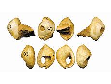 Conchas de colar achadas em Israel