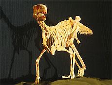 """Dino """"saci"""" de 220 milhões de anos, encontrado no Brasil, preenche lacuna na evolução"""