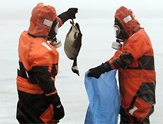 Bombeiros em roupas de proteção recolhem ave morta pelo vírus H5N1