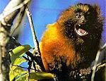 Vale pagar o mico na Globo?